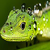Play Green lizard puzzle